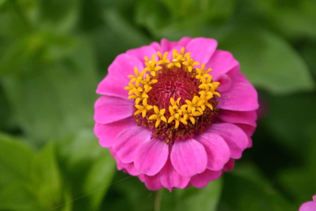 slot assumburg bloementuin