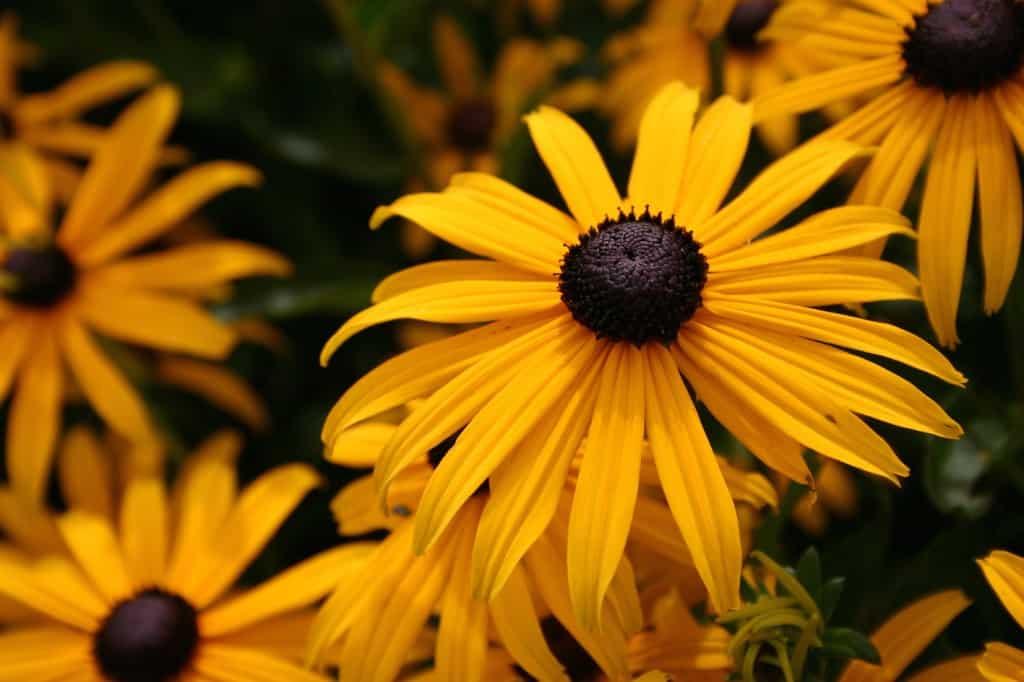 slot assumburg gele bloemen