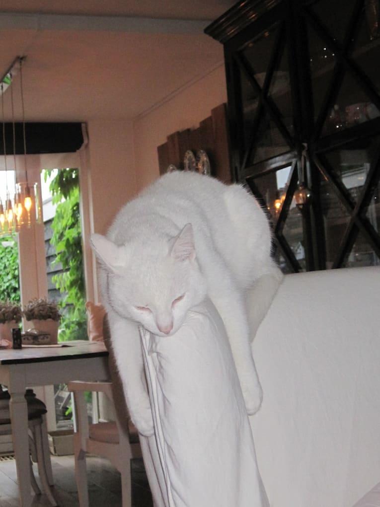 spook de witte kater luiwammes