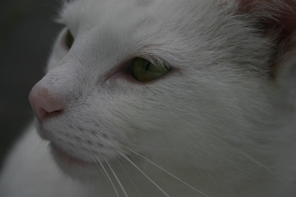 spook witte kater opzij