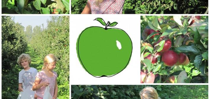 Olmenhorst zelfpluk appels en peren