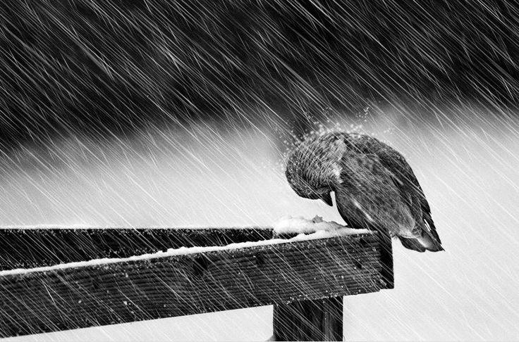 storm vogel