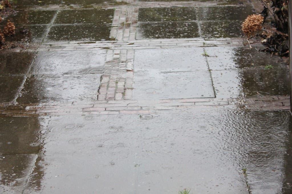week 2 regen