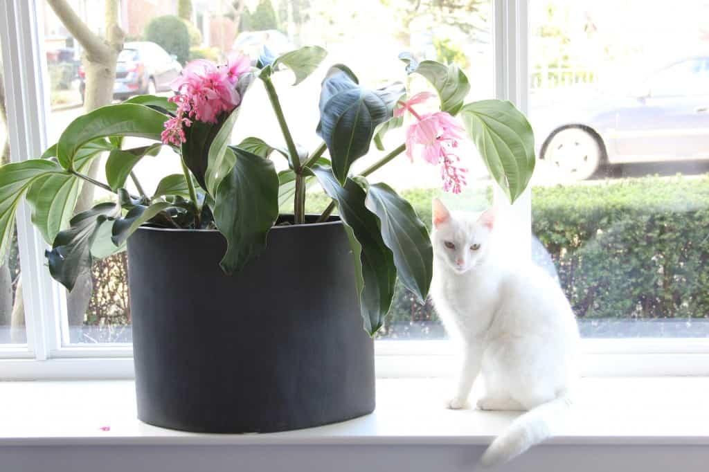 week 3 plant