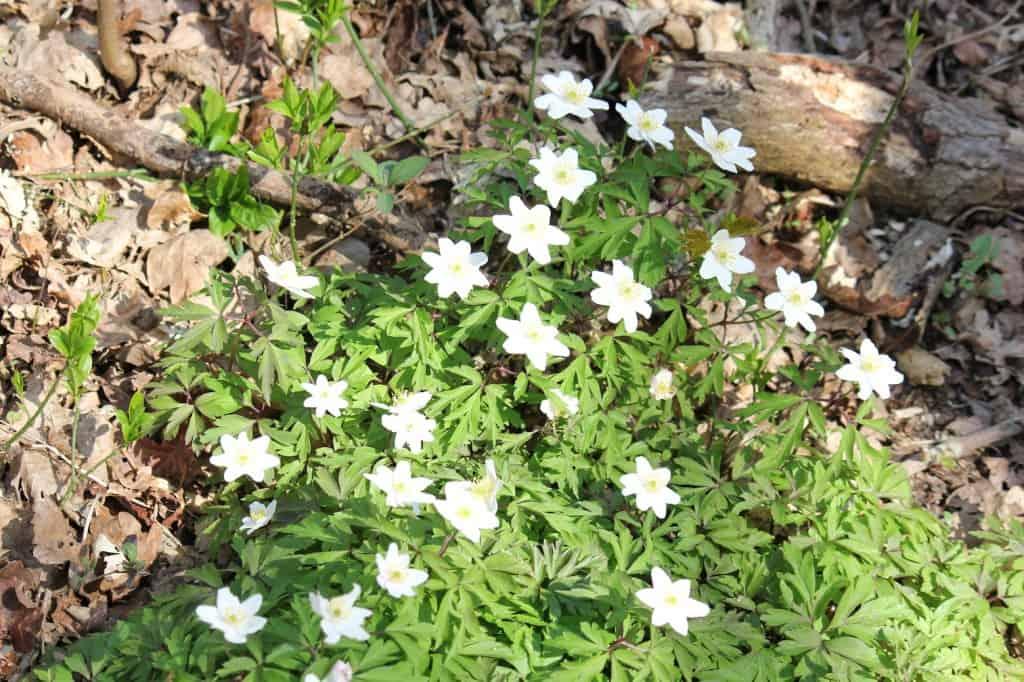 Noordholland Duinreservaat blommetjes