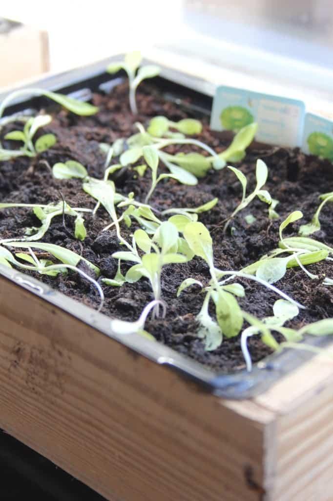 week 14 overplanten