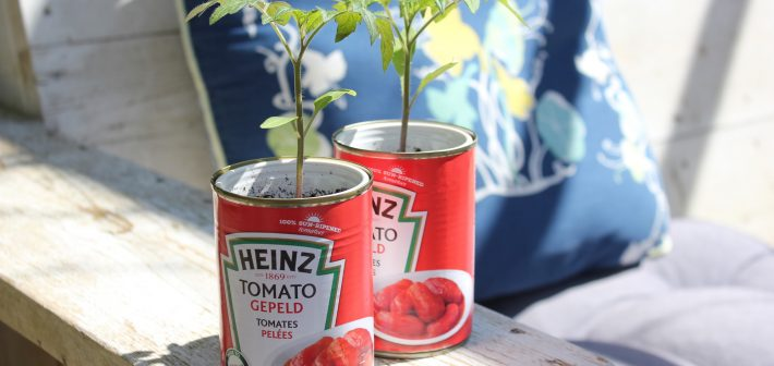 Tomaatjes kweek je gewoon zelf!