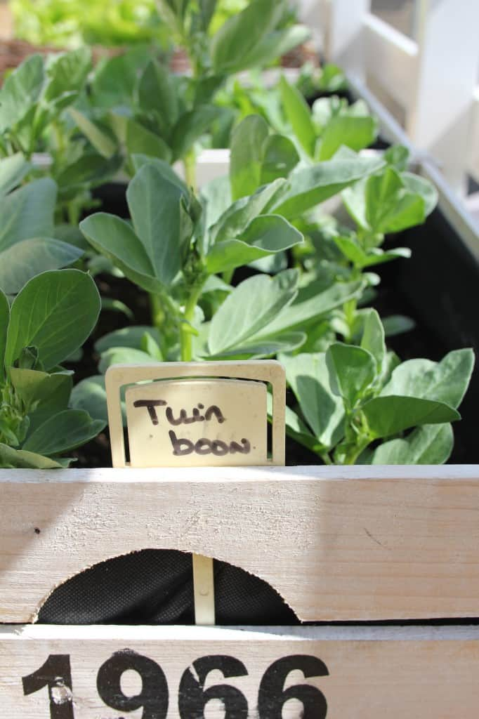Uit de moestuin: Tuinbonensalade | ENJOY! The Good Life