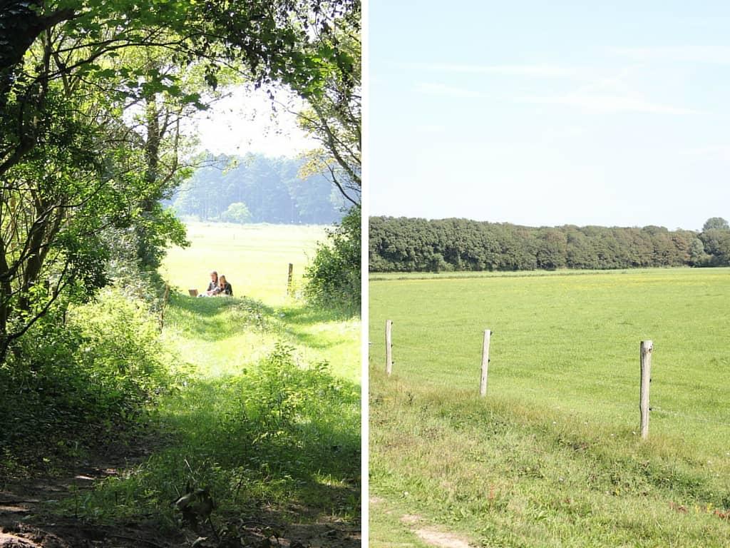 koningsbosch duo bos