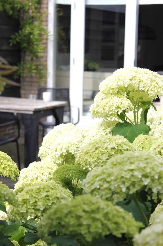 Haal de tuin naar binnen...   ENJOY! The Good Life