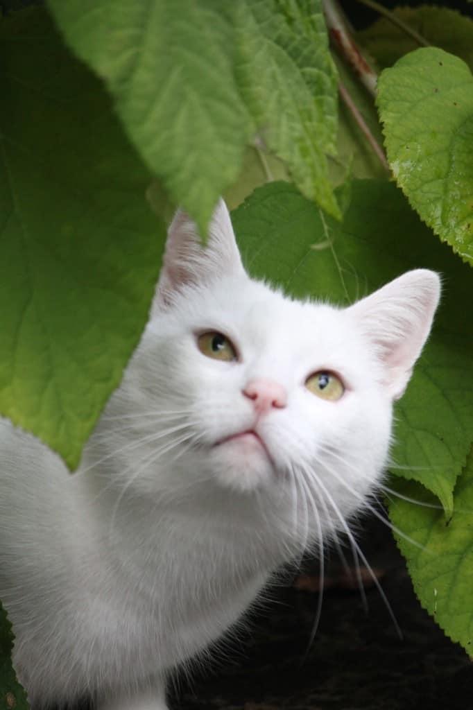 Het verborgen leven van de kat   ENJOY! The Good Life