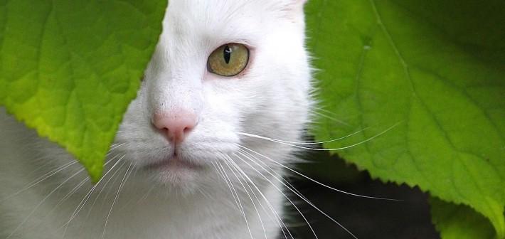 Het verborgen leven van de kat