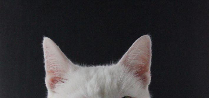 Van moody white cat naar patiënt
