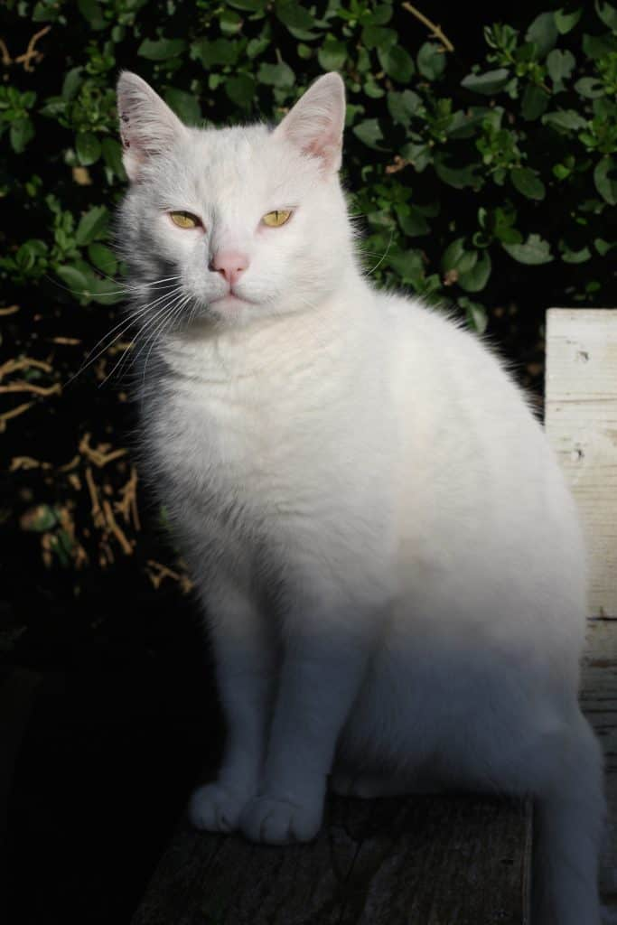Van moody white cat naar patiënt | ENJOY! The Good Life