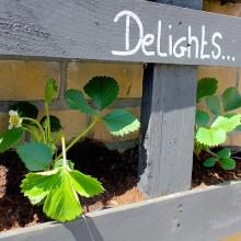 DIY: Strawberry Delights pallet
