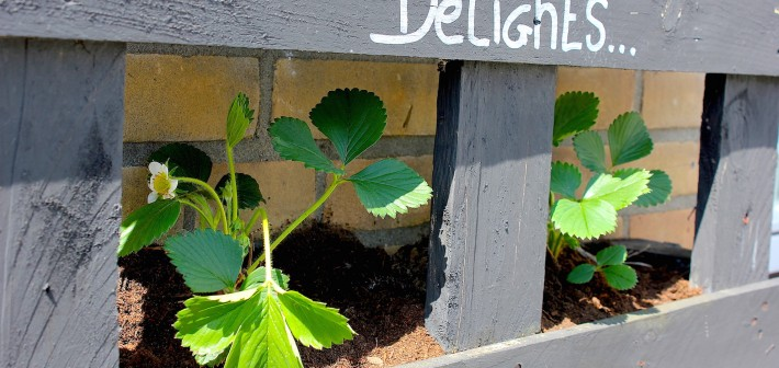 DIY: Strawberry Delights pallet