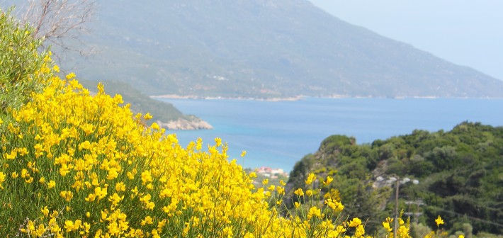 SAMOS, een eiland waar je terugkomt