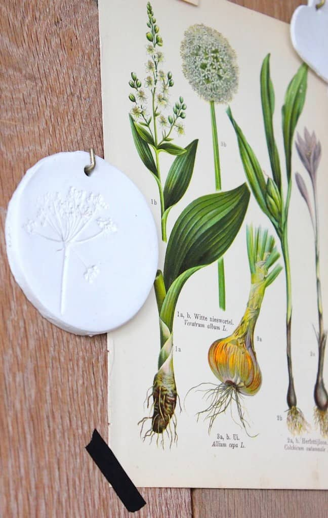 DIY: Botanische wandbordjes | ENJOY! The Good Life