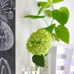 HORTENSIA ANNABELLE IN GLAS | ENJOY! The Good Life