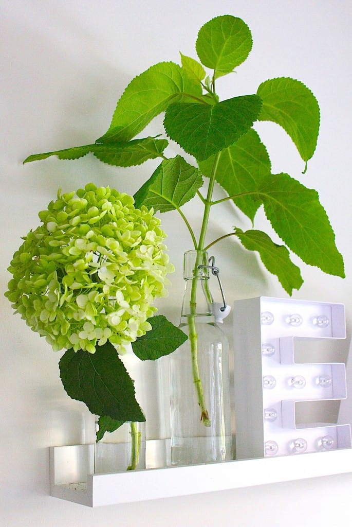 HORTENSIA ANNABELLE IN GLAS | ENJOY! The Good Life