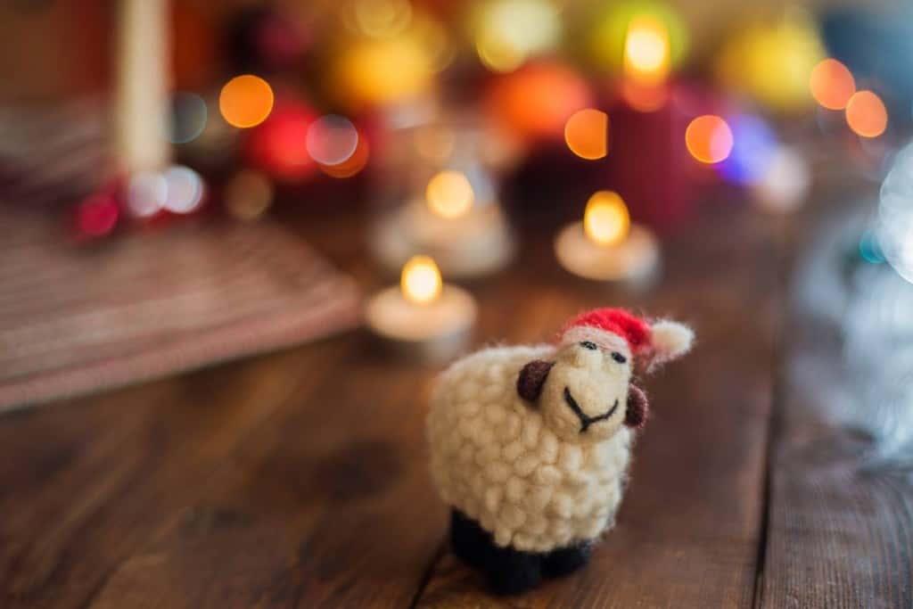 wt-schapen
