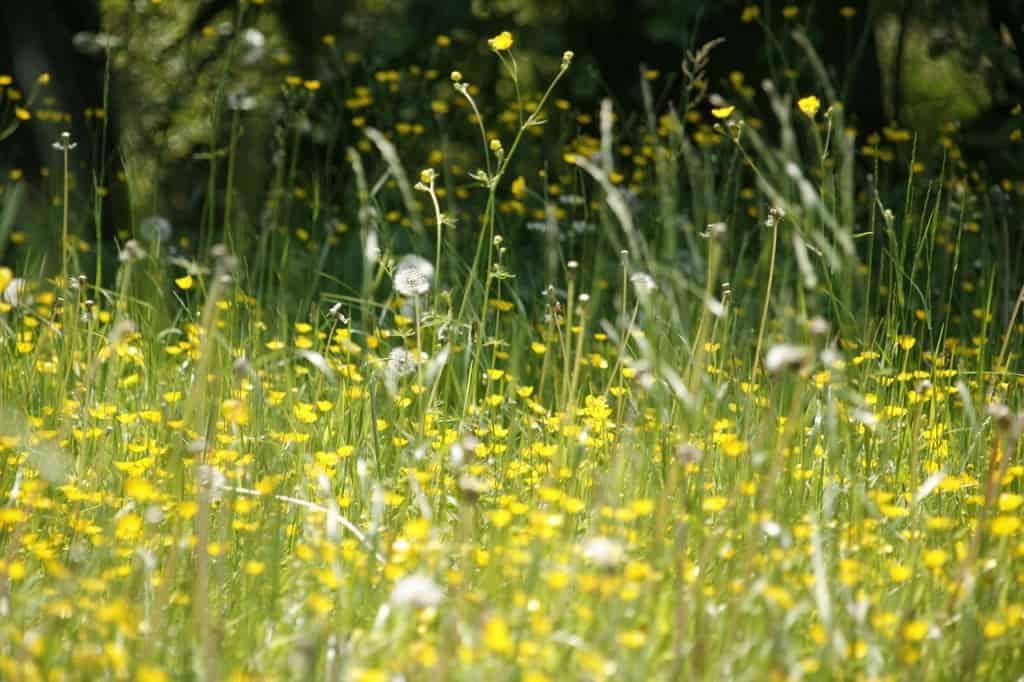 Tape tegen hooikoorts? Helpt dat? | ENJOY! The Good Life