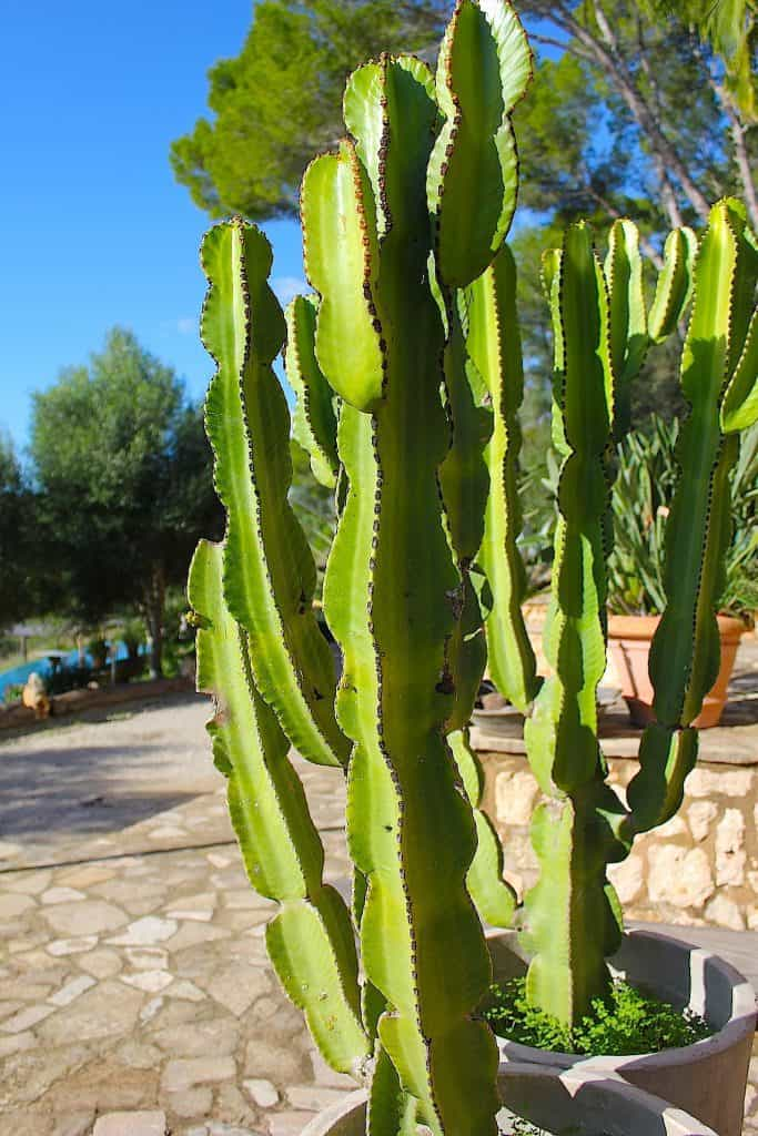 BINNENKIJKEN: Finca op Mallorca | ENJOY! The Good Life