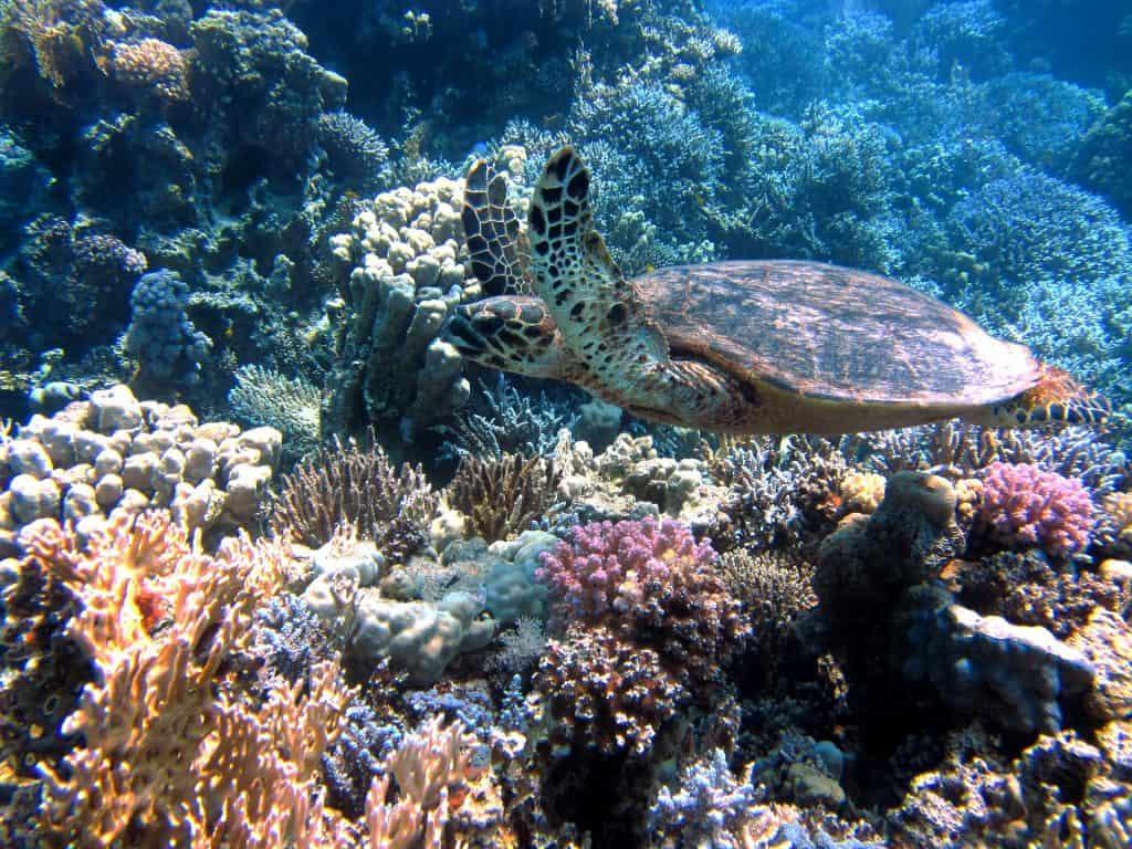 3 meest bijzondere duikplekken ter wereld | ENJOY! The Good Life
