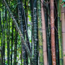 Bamboe mode: duurzaam, luxe en zijdezacht